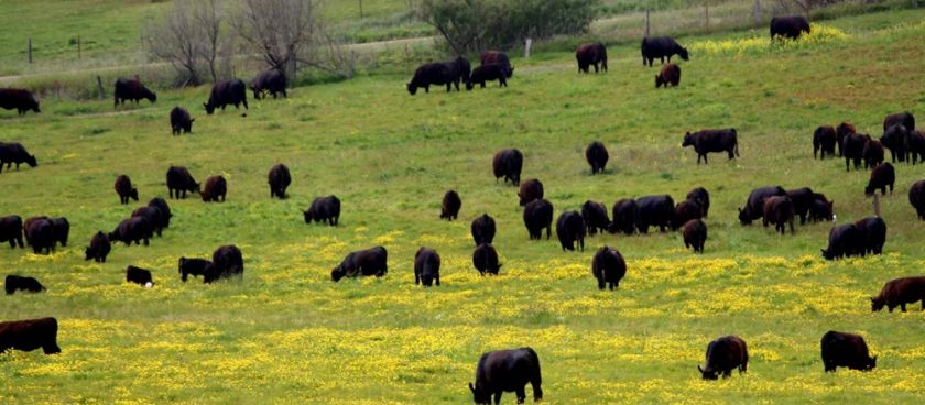 Born & Grazed: What is Rotational Grazing?