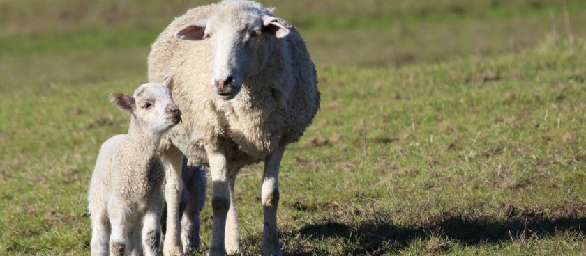 It's Lambing Season!