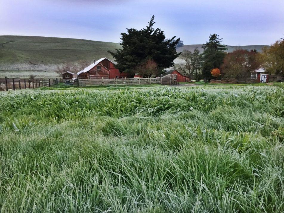 Scrgrass Farm Img 2054